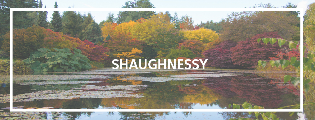 shaughnessy2