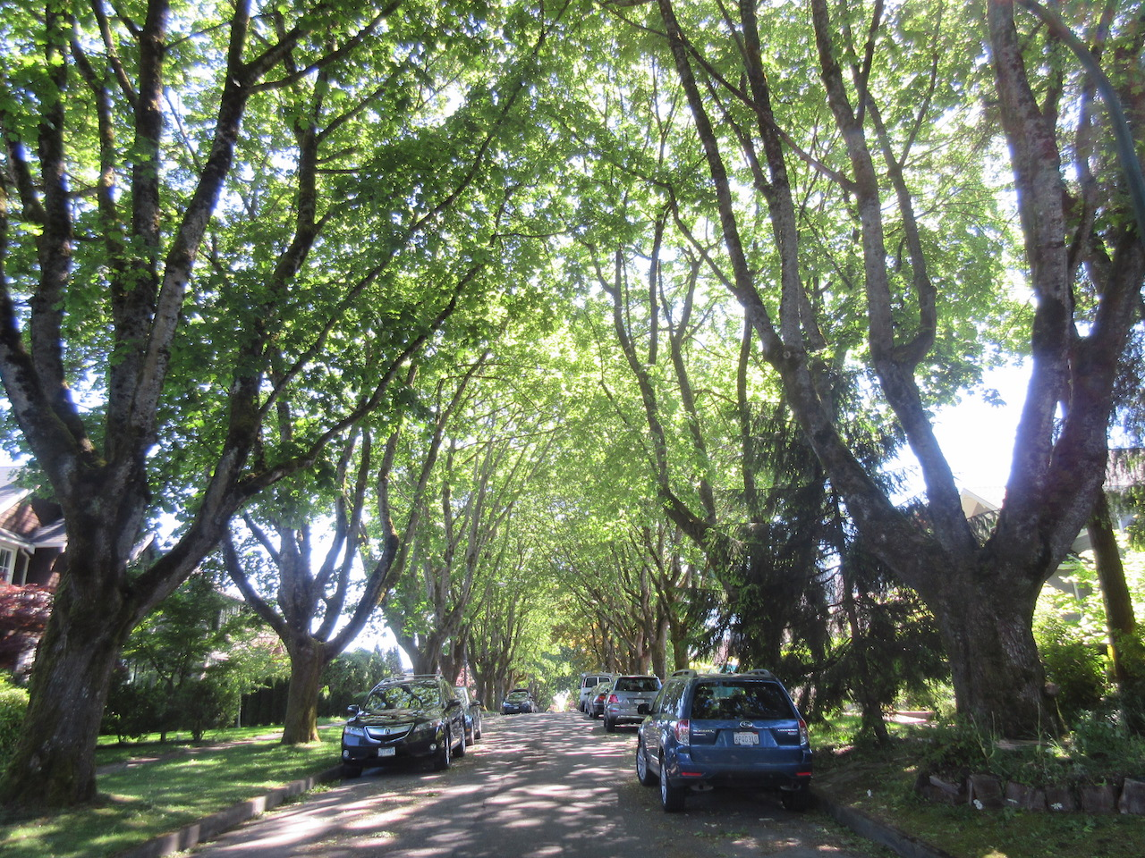 Vancouver West Side Green Trees Canopy street