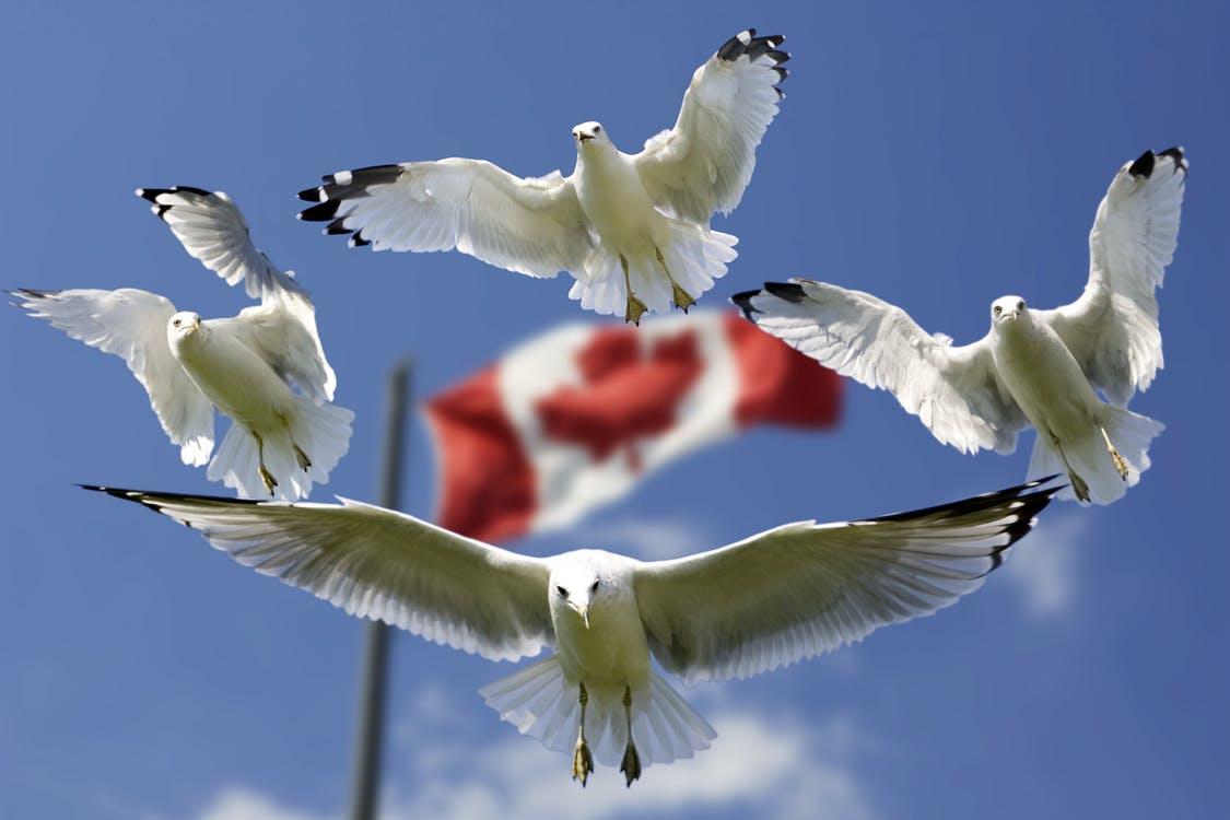 gulls formation flag sky 45874