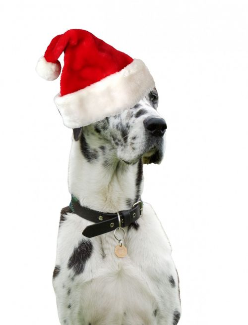 christmas dog santa hat 1380750288ive