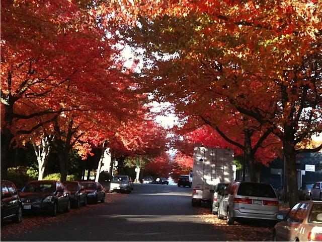 autumn img 1292
