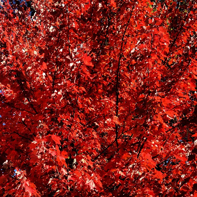 autumn im vancouver vancouver vancouverisawesome explorebc canada